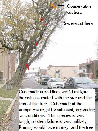 Historic Tree Care specified these pruning locations and the city carried them out.